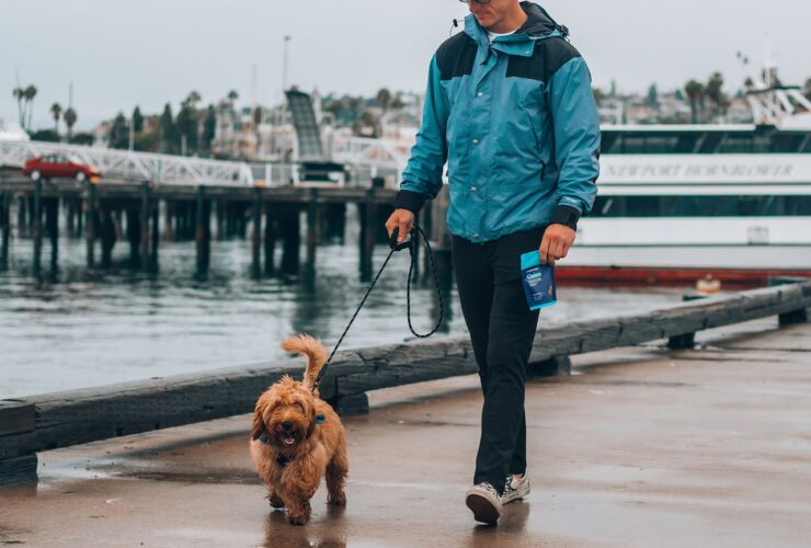 Can CBD help your Dog?